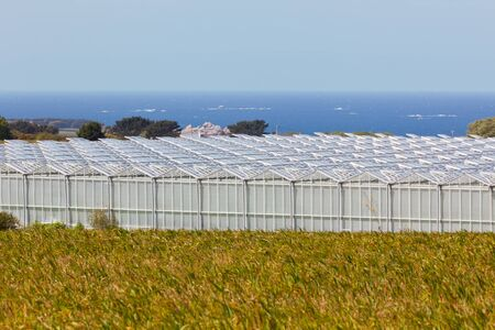 Outdoor view of an agricultural greenhouses against a blue sea photo
