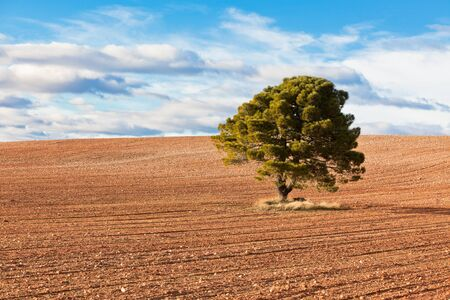 Lonely tree against blue sky with clouds and field. Stock Photo - 14574414