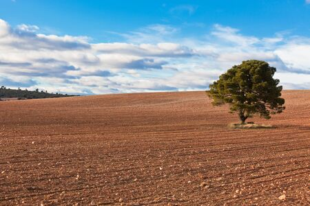 Lonely�tree against blue sky with clouds and�cultivated�field. Stock Photo - 14610145
