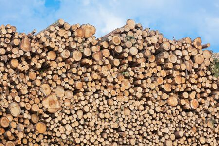 Big pile of logs on a blue sky background. Horizontal shot Stock Photo - 16815018