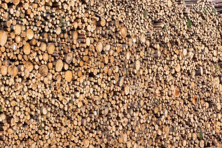 Big pile of logs as a horizontal background Stock Photo - 16815040