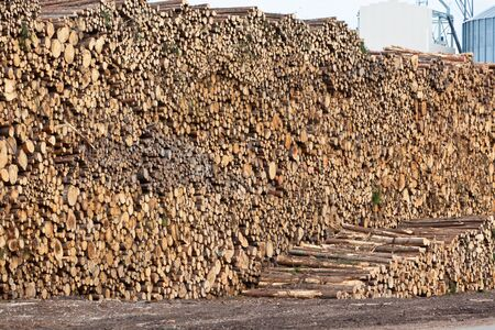 Big pile of logs on a wood processing plant background Stock Photo - 16815023