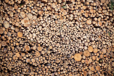 Big pile of logs as a horizontal background. Vignetted image Stock Photo - 17032860