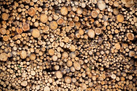 Big pile of logs as a horizontal background. Vignetted image Stock Photo - 17032858