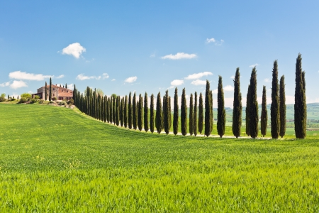 Classic view of Tuscan farmhouse, green field and cypress tree rows. Spring, blue sky Standard-Bild