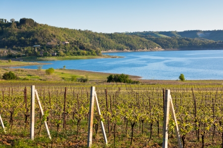 non cultivated: Italian landscape with vineyards and lake at sunset  Horizontal shot Stock Photo