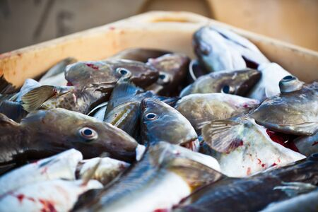 Catch of the day - Fresh Fish in Shipping Container. Horizontal shot Stock Photo - 18726438