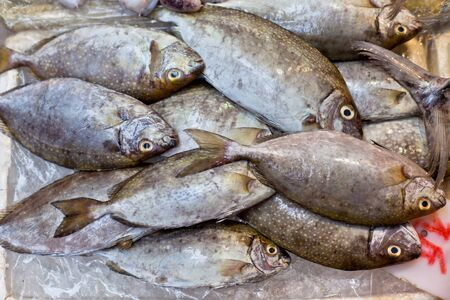 Catch of the day - Fresh Fish at Local Asian Market Stock Photo - 18929152