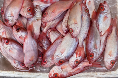 Catch of the day - Fresh Grouper Fish at Local Market Stock Photo