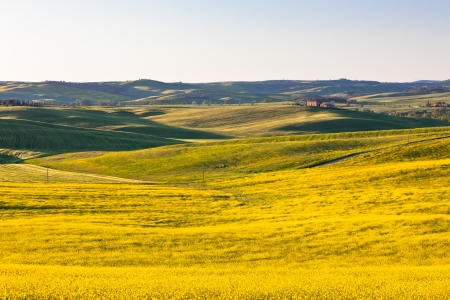 val d orcia: Outdoor Tuscan Val d Orcia green and yellow fields  Horizontal shot