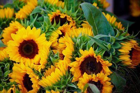 bunch up: Decorative Sunflowers bunch. Horizontal close up shot