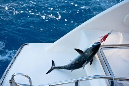 fishing catches: Fish on the hook. Fishing from a sailing yacht. Stock Photo
