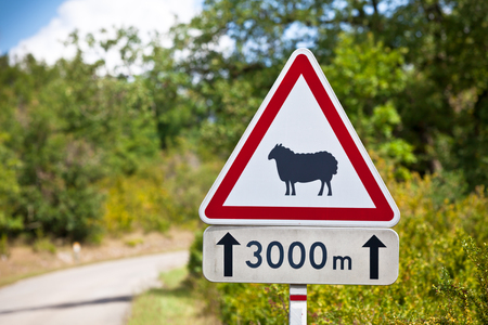 sheep road sign: Triangular traffic sign warning of sheep on the road on a rural road background