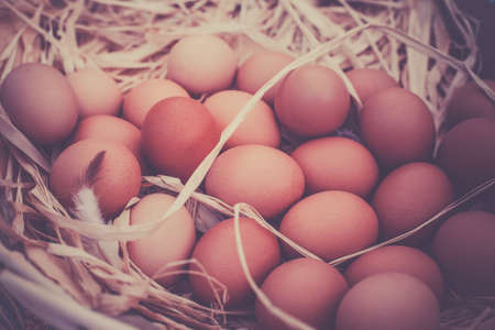 in the basket: Basket of organic eggs in a rural farmers market. Filtered shot with a selective focus