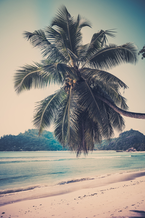 filtered: Tropical beach at Mahe island Seychelles. Vertical filtered shot