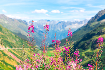 alp: Swiss Apls mountains in summer with wild pink flowers on the foreground Stock Photo