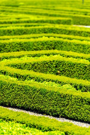 green landscape: Green hedge labyrinth in french garden. Vertical shot with a selective focus