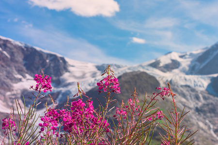 Swiss apls mountains in summer with wild pink flowers on the stock stock photo swiss apls mountains in summer with wild pink flowers on the foreground filtered image mightylinksfo