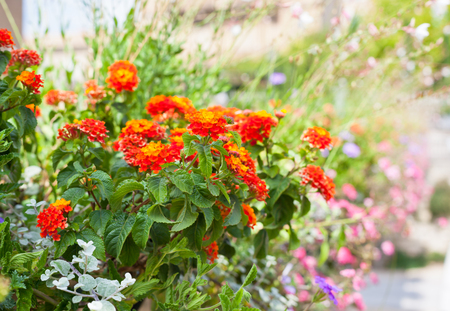 street shot: Multicolored flowerbed on a street. horizontal shot. small GRIP