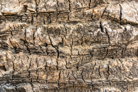 rind: old dry palm tree rind texture close up