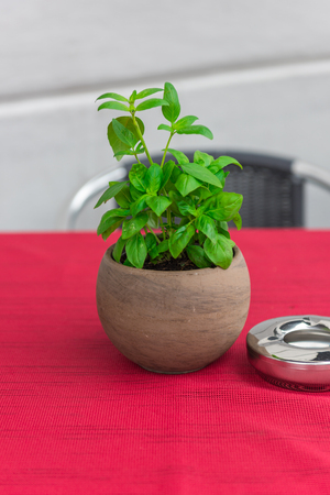 cafeteria tray: Cafe table with herbs in a pot and a red tablecloth Stock Photo