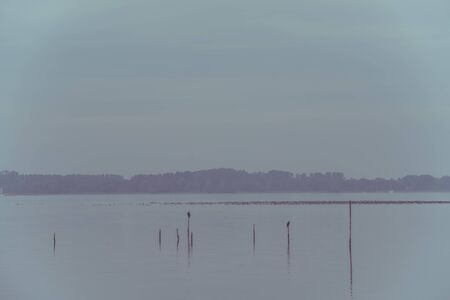 still water: Northern Sea landscape: still water and birds on wooden posts. Toned image Stock Photo