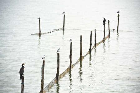 still water: Northern Sea landscape: still water and birds on wooden posts