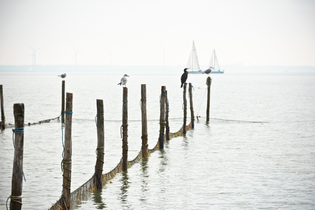 markermeer: Northern Sea landscape: still water and birds on wooden posts