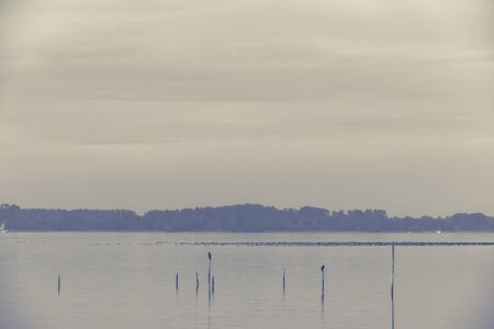 markermeer: Northern Sea landscape: still water and birds on wooden posts. Toned image Stock Photo