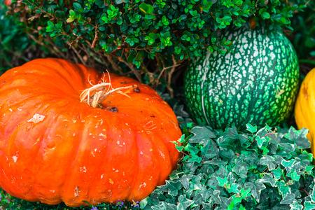 Orange pumpkins as a decoration. Shot with selective focus Stock Photo