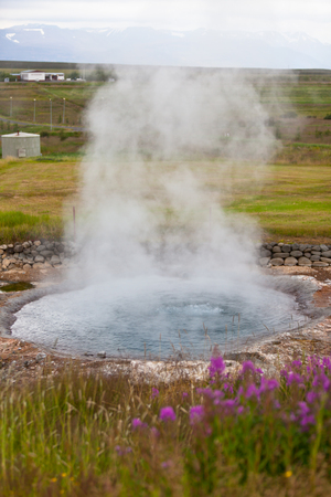 Geothermal Spring on a blooming flower field in Iceland