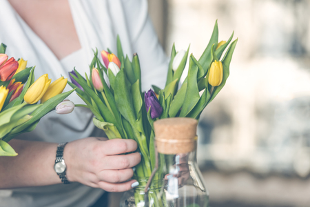 Woman arranging multicolored tulips in a glass vase. Indoors natural light shot with small depth of field