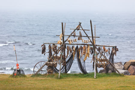 stockfish: Rack for fish drying on the Northern Iceland coast