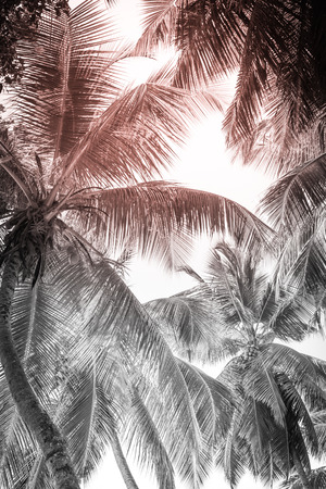 High palms on a tropical beach. Black and white Stock Photo