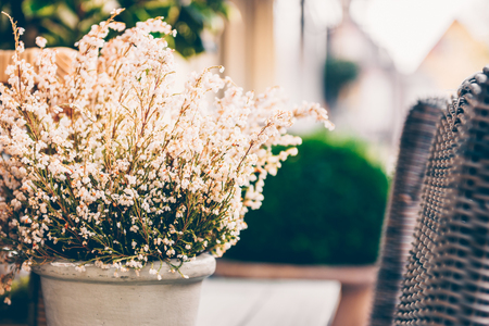 Potted white heather flowers standing on the wooden table outdoors