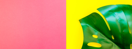 Tropical jungle palm monstera leaves on bright yellow and pink duotone paper background. Summer creative flat lay concept template for text. Long wide banner Stock Photo