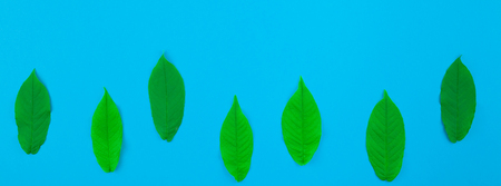 Creative flat lay top view pattern with fresh green leaves on bright blue background with copy space in minimal pop art style, template for text. Long wide banner