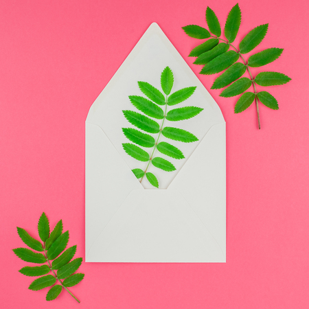 Creative flat lay top view white letter mock up with fresh green rowan tree leaves on bright pink square background with copy space in minimal duotone pop art style