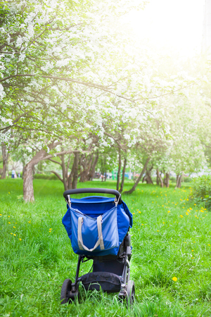 Blue baby stroller carriage on green grass in the white blooming apple garden. Maternity motherhood concept Imagens