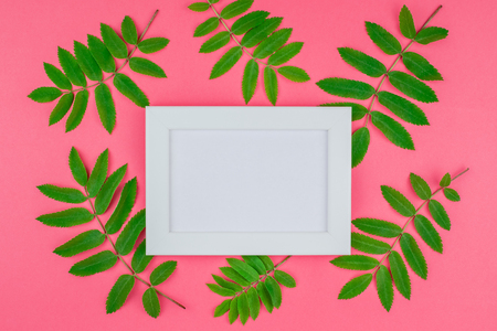 Creative flat lay top view white frame mock up with fresh green rowan tree leaves on bright pink background with copy space in minimal duotone pop art style, template for text