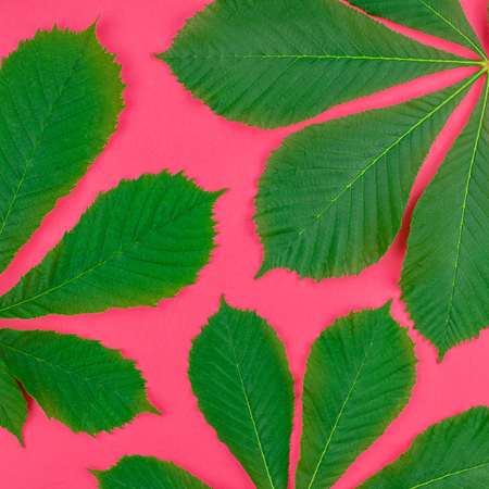 Creative flat lay top view pattern with fresh green chestnut leaves on bright paper pink background with copy space in minimal pop art style, square floral plant frame template for text