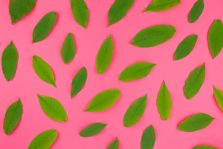 Creative flat lay top view pattern with fresh green leaves on bright pink background in minimal pop art style