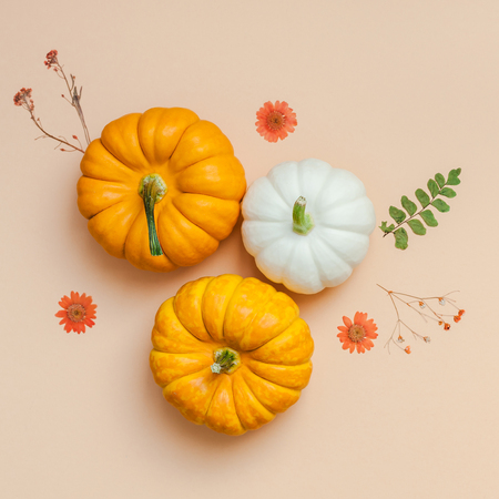 Creative Top view flat lay autumn composition. Pumpkins dried flowers leaves color paper background copy space. Stock Photo