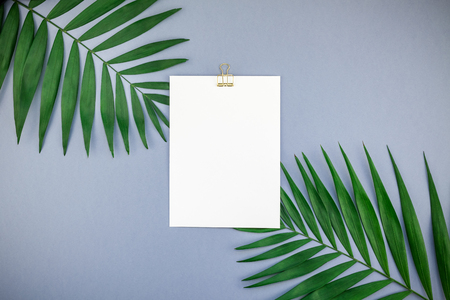 Creative flat lay top view mock up blank paper sheet postcard clipboard green tropical palm leaves on blue grey paper background copy space. Minimal tropical palm leaf plants summer concept template Stock Photo