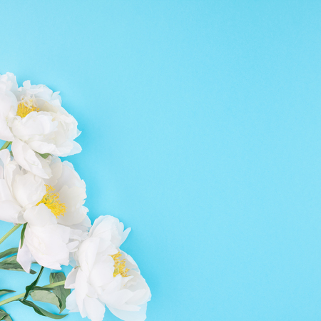 White peony flowers on square blue color paper background with copy space in minimal style, template for postcard, lettering, text or your design. Wedding invitation and celebration greeting concept