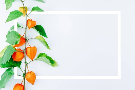 Creative layout with Orange Flower of physalis alkekengi on white background with frame. Withania somnifera. Ashwagandha. Chinese lantern plants, Japanese lantern, bladder cherry, winter cherry Standard-Bild