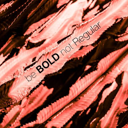 Succulent cactus plant part close up under the sunlight sky toned in coral color with text message Be Bold Not Regular
