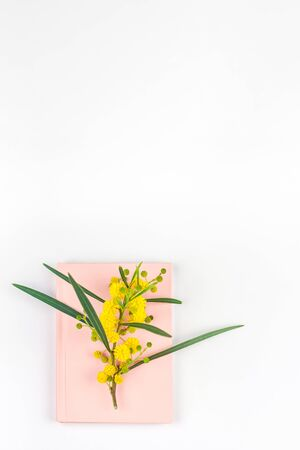 Acacia pycnantha or Mimosa twig with yellow fluffy flowers on pink notebook isolated on white background. Top view flat lay with copy space in minimalism style Stok Fotoğraf