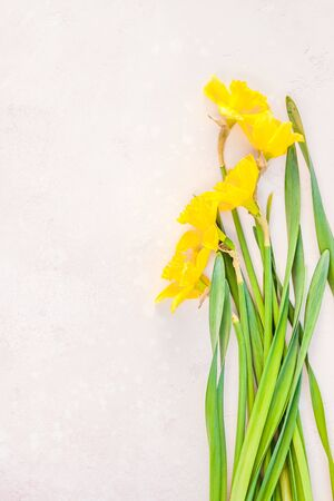 Creative flat lay top view 8 March International Womens Day greeting card with yellow daffodils spring flowers on pink background. Celebration Postcard template Stok Fotoğraf