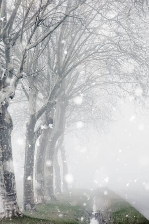 Foggy and snowy weather. Winter rural landscape with country road and trees alongside in France. Monochromatic neutral tones with natural light.